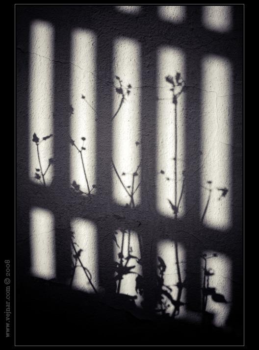 černobílé obrázky 05