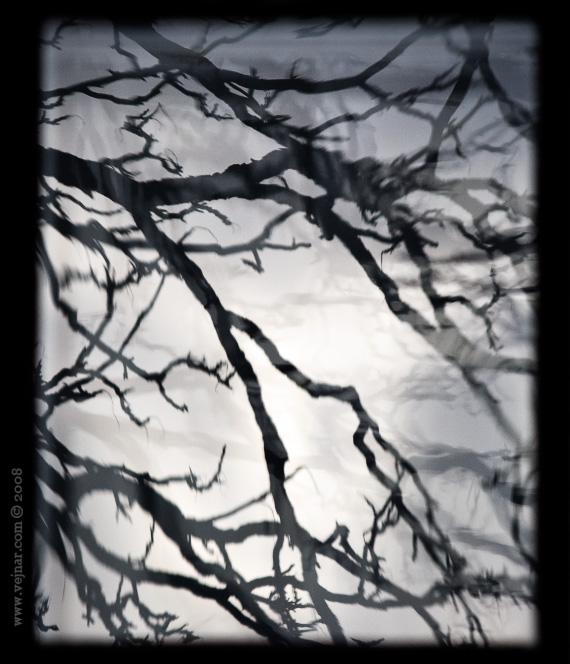 čb větve