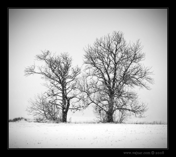 černobílé foto 15