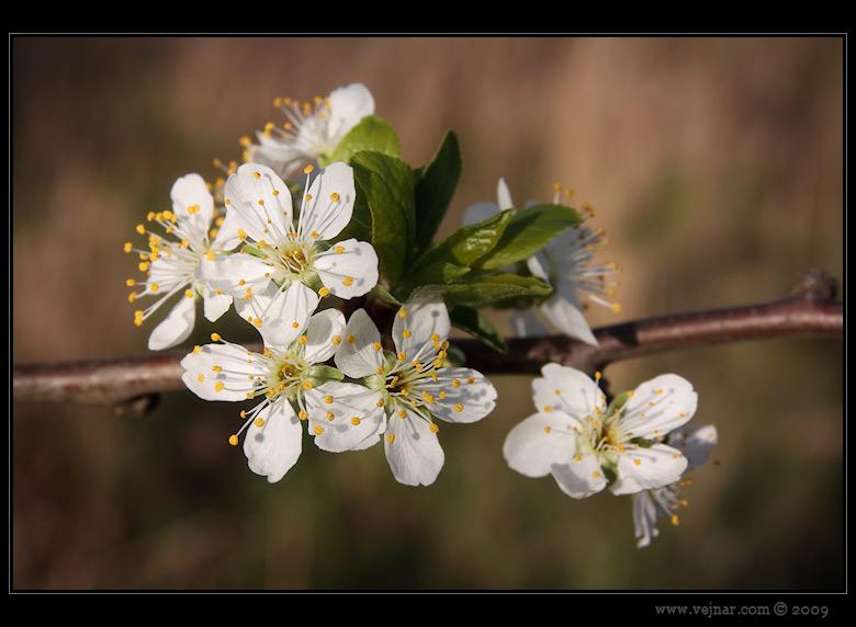 jarní fotky