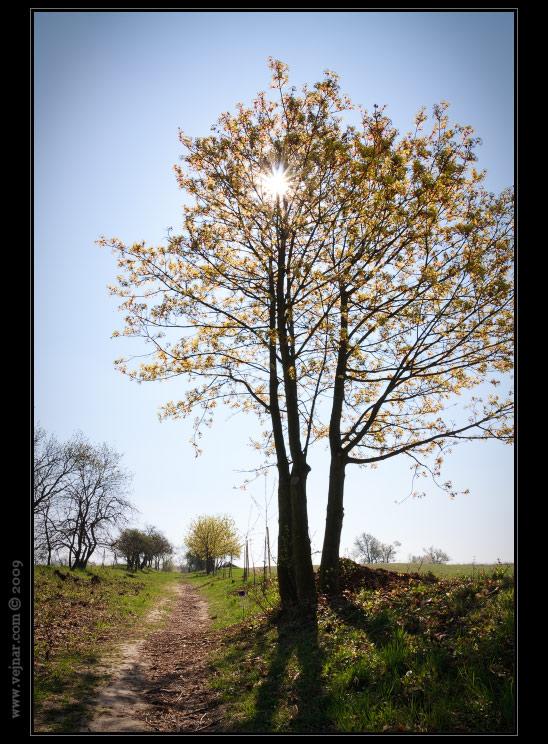 příroda na jaře