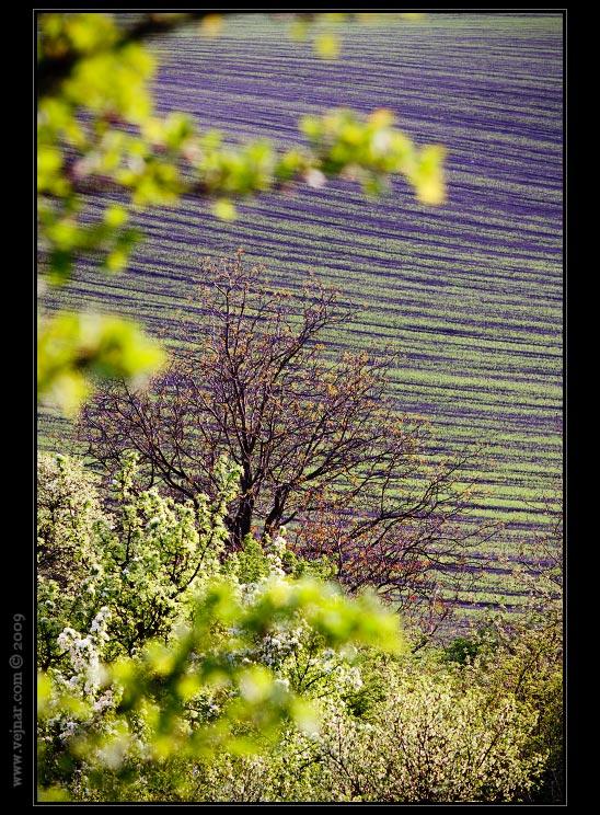 jarní stromy