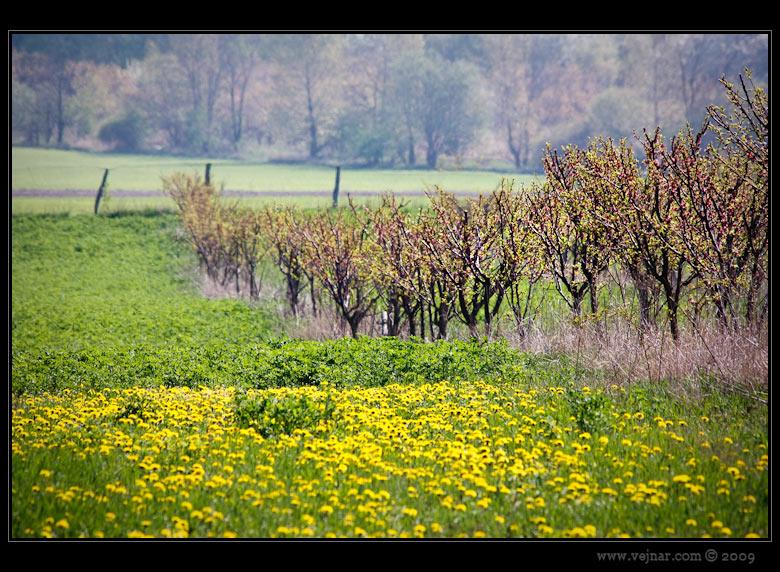 stromy na jaře