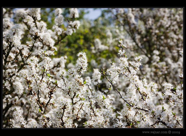 obrázky jara