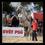 kůň 03