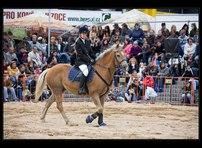 fotky koní 10