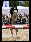 fotky koní 11