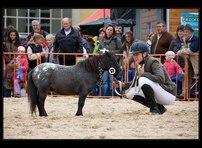 kůň lysá 13
