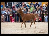 kůň lysá 14
