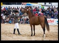 výstava koní 18