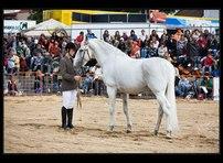 výstava koní 19
