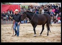 fotky koní 21