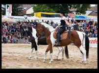 fotky koní 22