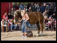 fotky koní 23