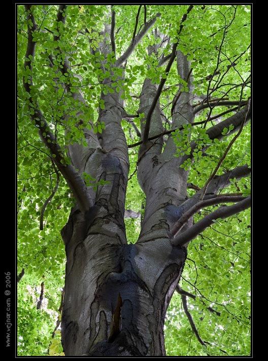 stromy 06
