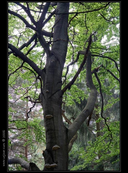 stromy 07