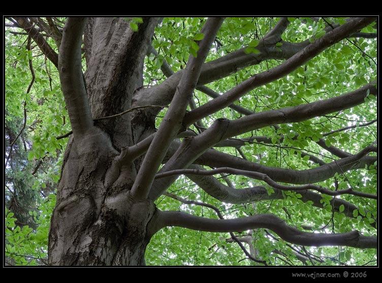 Fotky stromů v lese