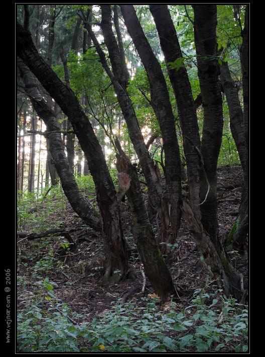 strom 12