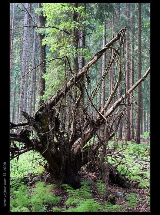 strom 14