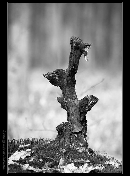 malý strom