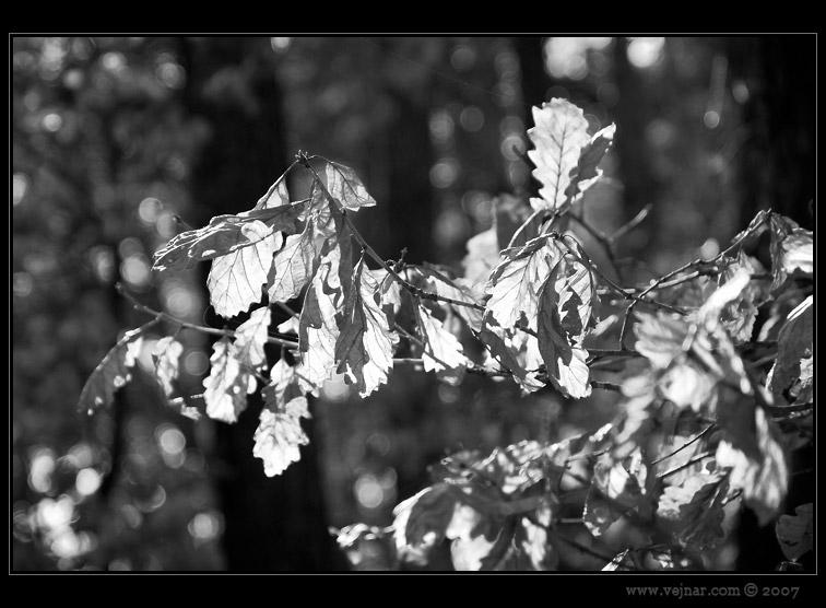 větev v lese
