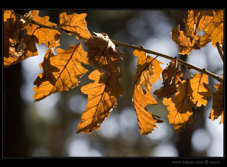 nasvícené listí