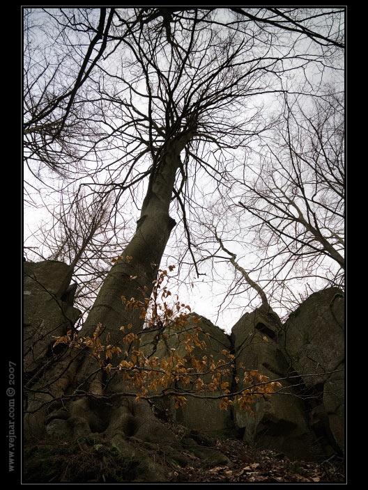strom 02