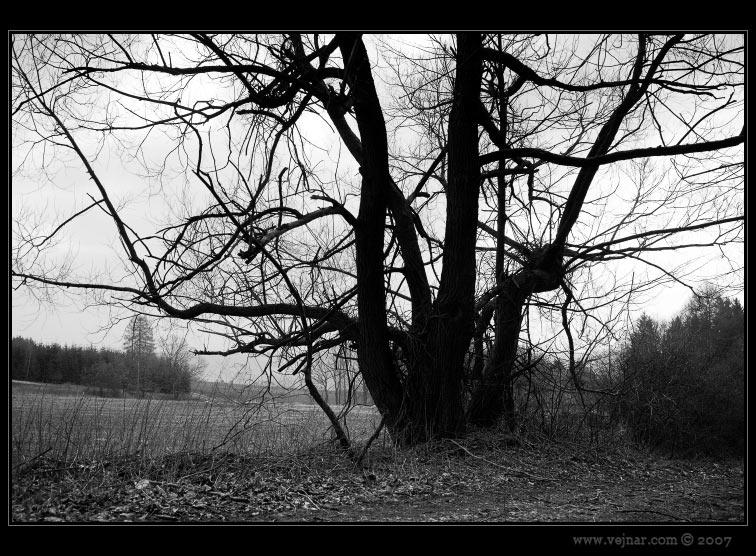 strom 07