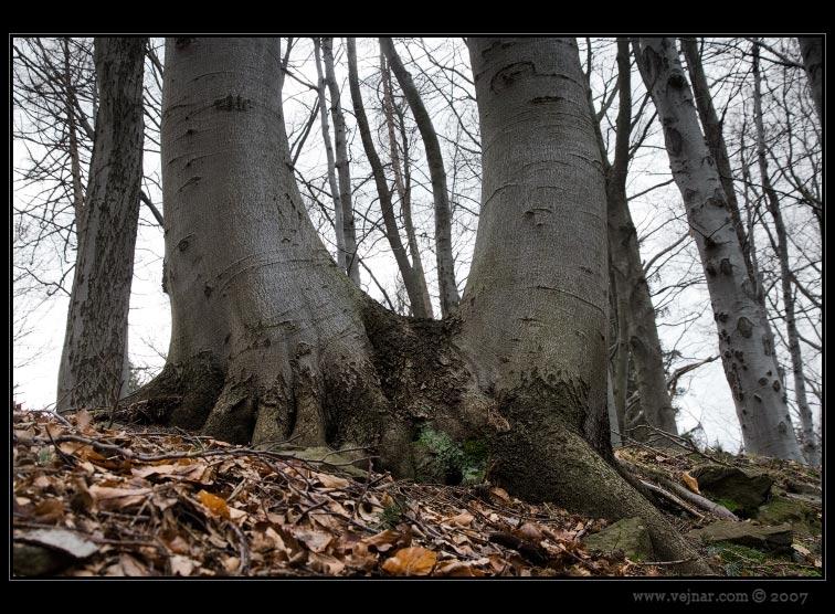 stromy 10