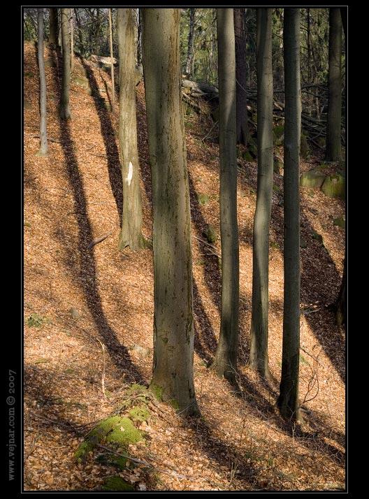 stromy 12