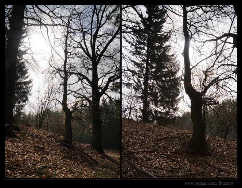 stromy foto 15