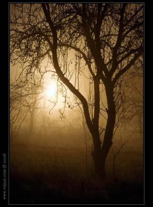 noční krajina