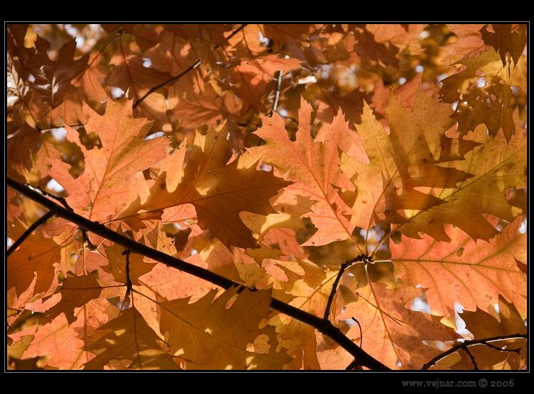 listí na podzim