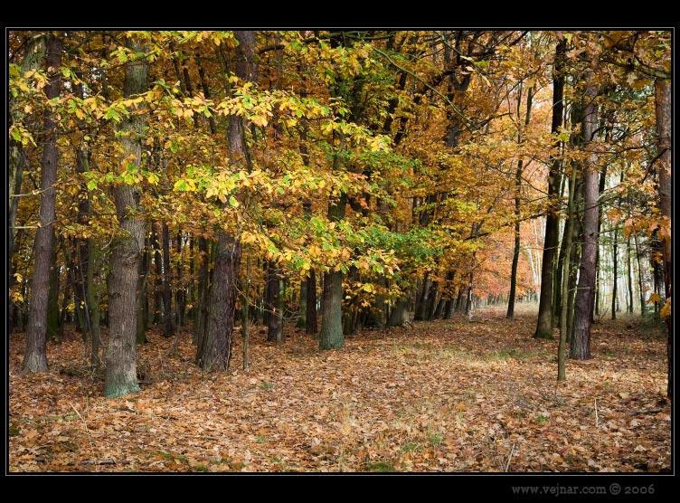 podzimní fotky