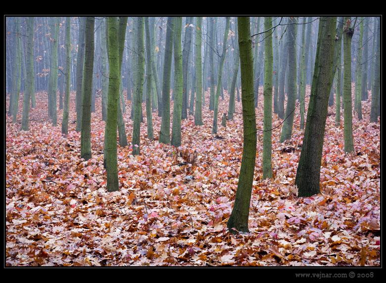 podzimní příroda 04