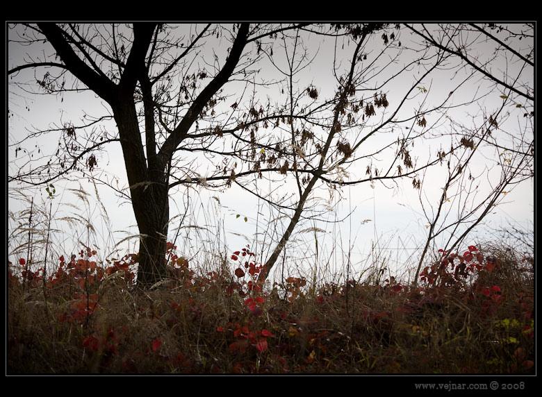 podzimní foto 07