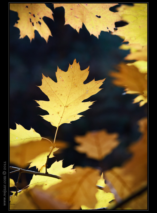 Podzimní fotky přírody