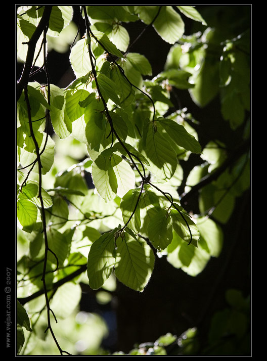 příroda foto 06