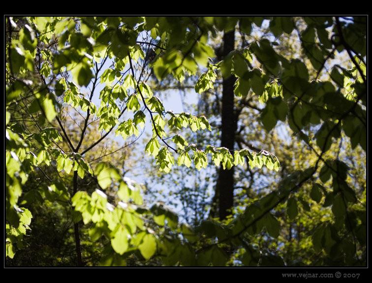 příroda 08