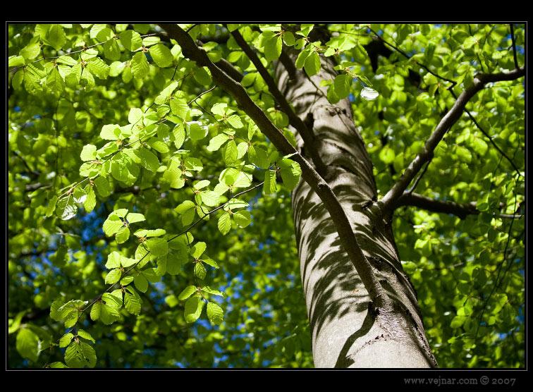 foto příroda 09