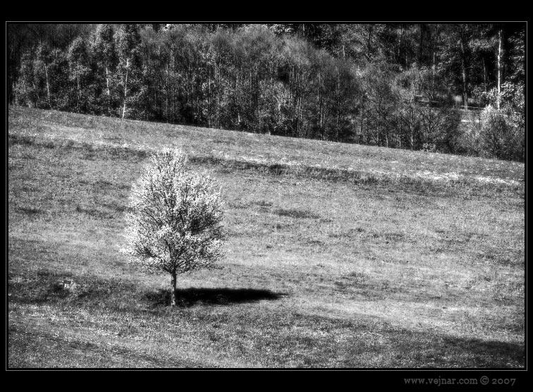 příroda 14