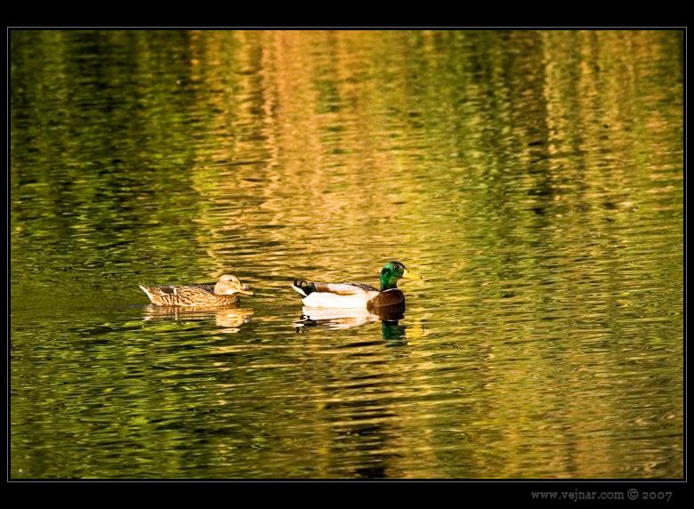 Obrázky přírody 6