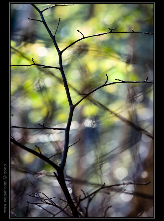 obrázky přírody 15