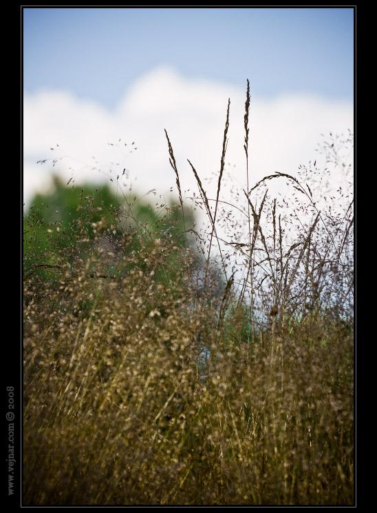 příroda fotky 07