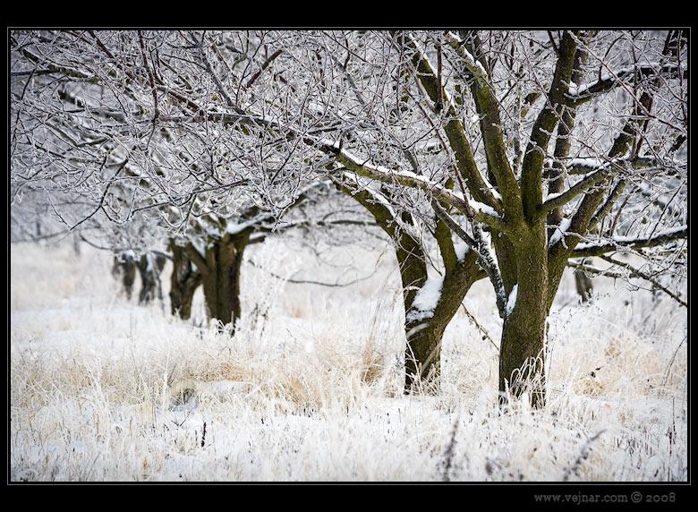 zimní obrázky 01