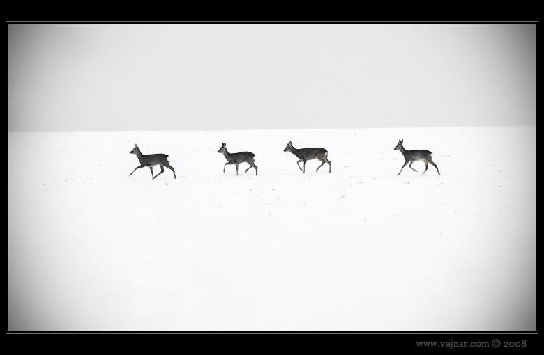 srnky v zimě