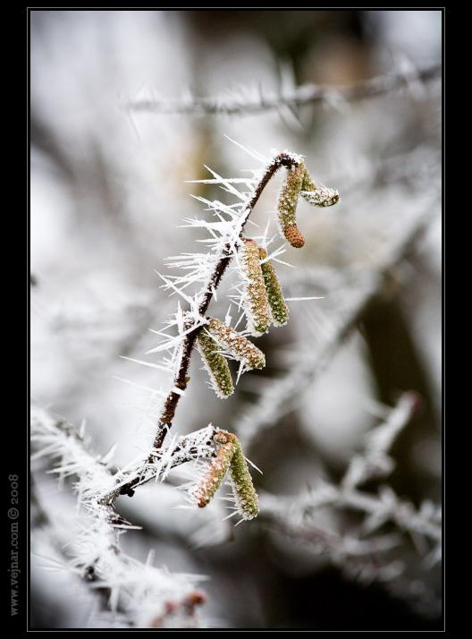 zimní jinovatka