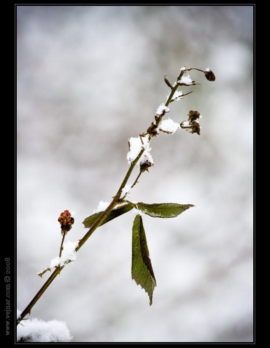 obrázky zimy 12