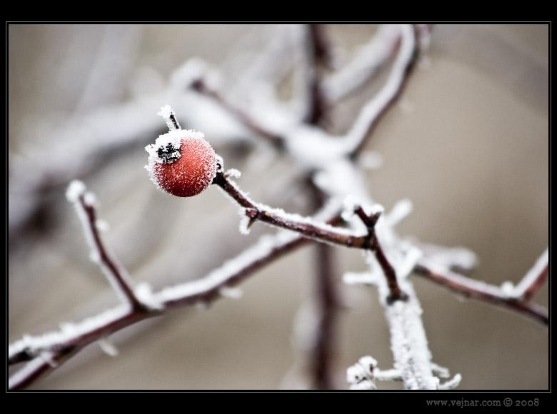 zimní obrázky 10