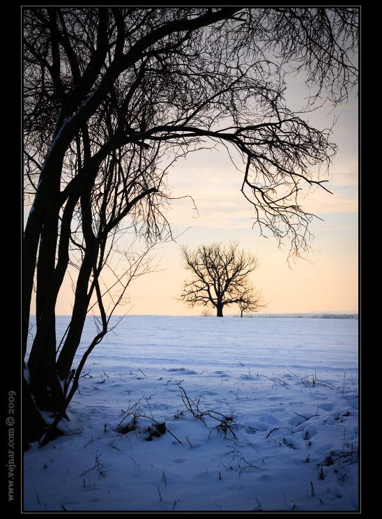 příroda v zimě
